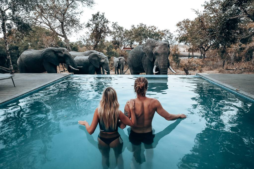 Travel Guide To The Perfect South Africa Safari Holiday